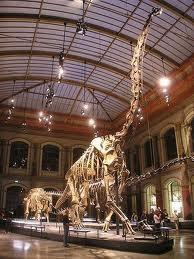 Museo de Humboldt de historia natural viajes y turismo