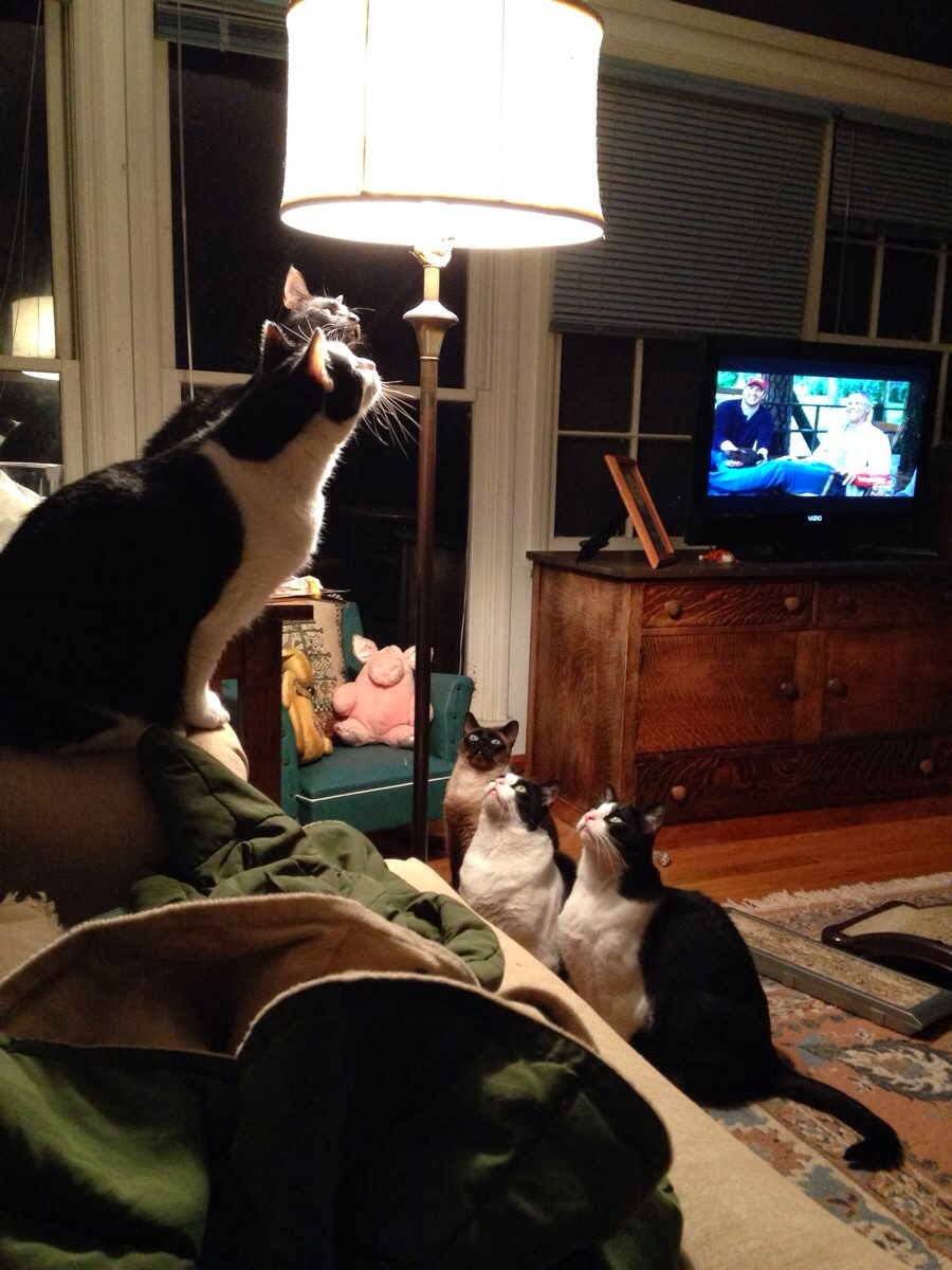 Funny cats - part 82 (40 pics + 10 gifs), cat photo, cats try to catch bug on lamp