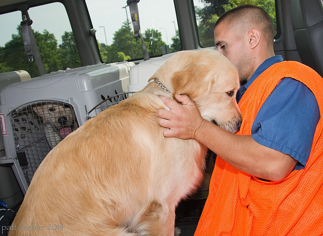 A man wearing an orange vest is on the right holding a golden retriever with his left arm and hand. The golden is sitting in front of him in a van with his head pressed against the man's chest. There is a dog crate in the background with a yellow lab looking out.