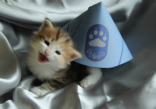 http://newyork.cbslocal.com/2015/06/04/911-stamford-cat/