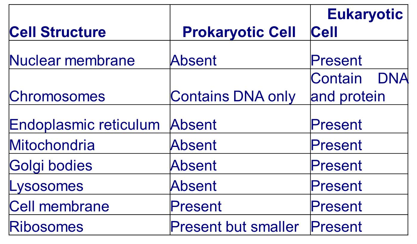 the difference between prokaryotes and eukaryotes The similarities and differences between prokaryotic and eukaryotic cells all cellular life also contains describe the difference between prokaryotic and.