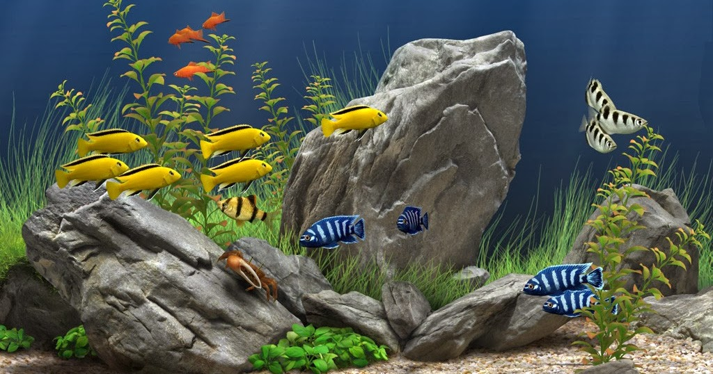 how to establish a fish pond