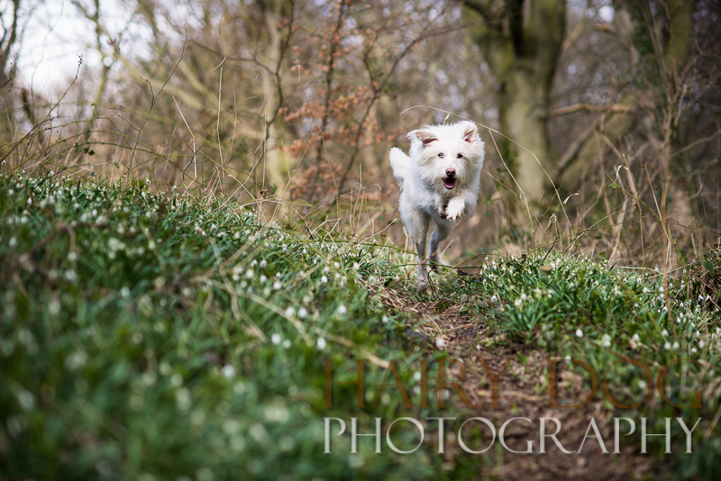 Photography of a dog in the woods by hairy dog photography