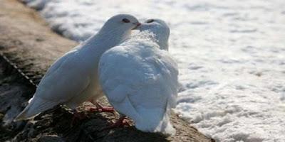 http://3.bp.blogspot.com/-oiuLF1NetRU/UbBW4YYTfpI/AAAAAAAAFHY/fEooEg61NtM/s1600/Animal_love_14.jpg