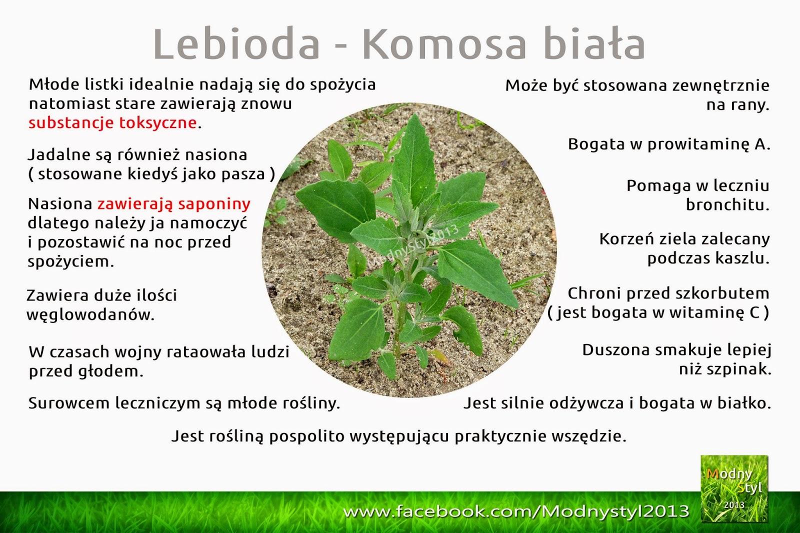 Lebioda czyli komosa biała