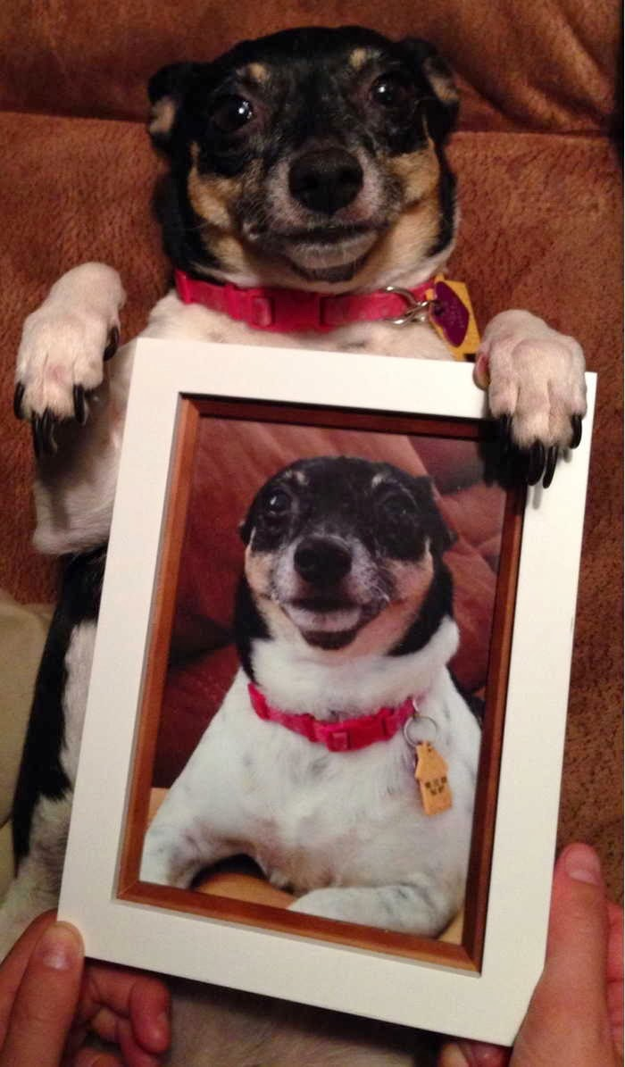 adorable dog pictures, little dog holds a picture of himself