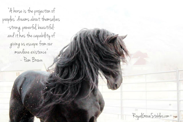 royal grove stables blog inspirational horse quotes