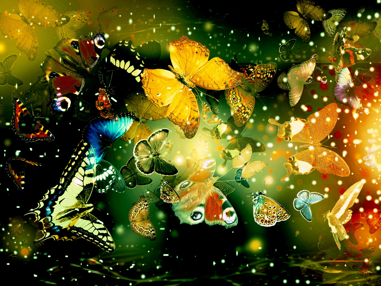 butterfly fantasy desktop wallpaper