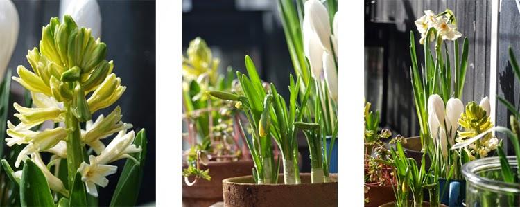 Skab forår ved hjælp af løgplanter i sarte toner