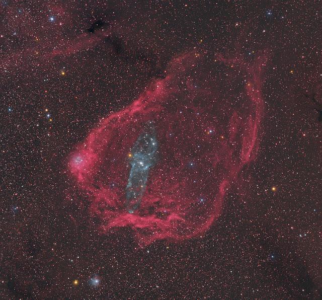 Chú mực khổng lồ trong chú dơi bay. Tác giả : Steve Cannistra (StarryWonders).