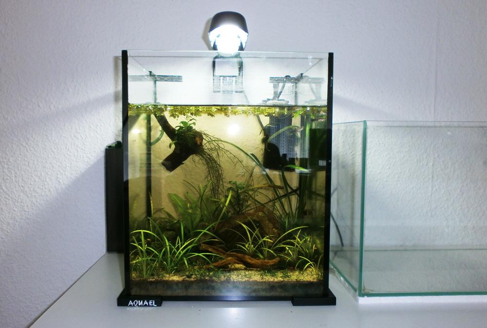 neu einrichtung des aquael shrimpsets new setup of the aquael shrimpset aquascapia. Black Bedroom Furniture Sets. Home Design Ideas