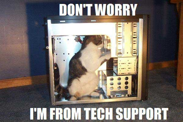 Pictures Funny Cat Pictures   Entertainment Funny Cat Pictures
