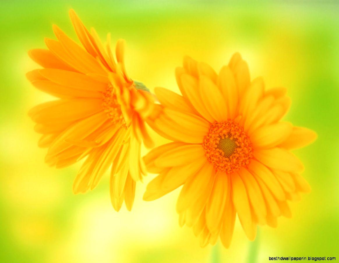 Beautiful flower wallpaper free download best hd wallpapers view original size mightylinksfo