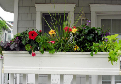 Dr dan 39 s garden tips a bountiful box of beauty - Flower boxes for railings ...