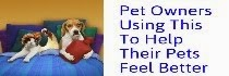 Try This To Make Your Pets Feel Better