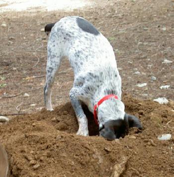 لماذا تقوم الكلاب بدفن العظام في الأرض Ma3lomat-186-gg