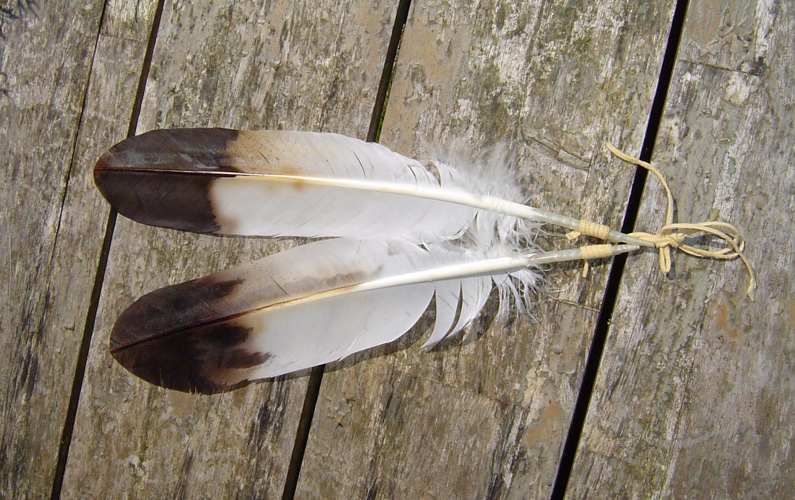 Contemporary Makers Eagle Feathers By Andrie Brand