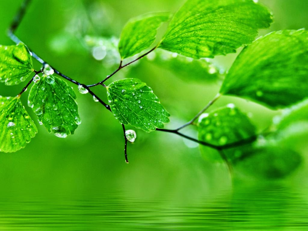 Green-natural-widescreen-wallpaper