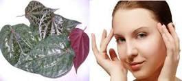 perawatan kulit dengan daun sirih yang simpel
