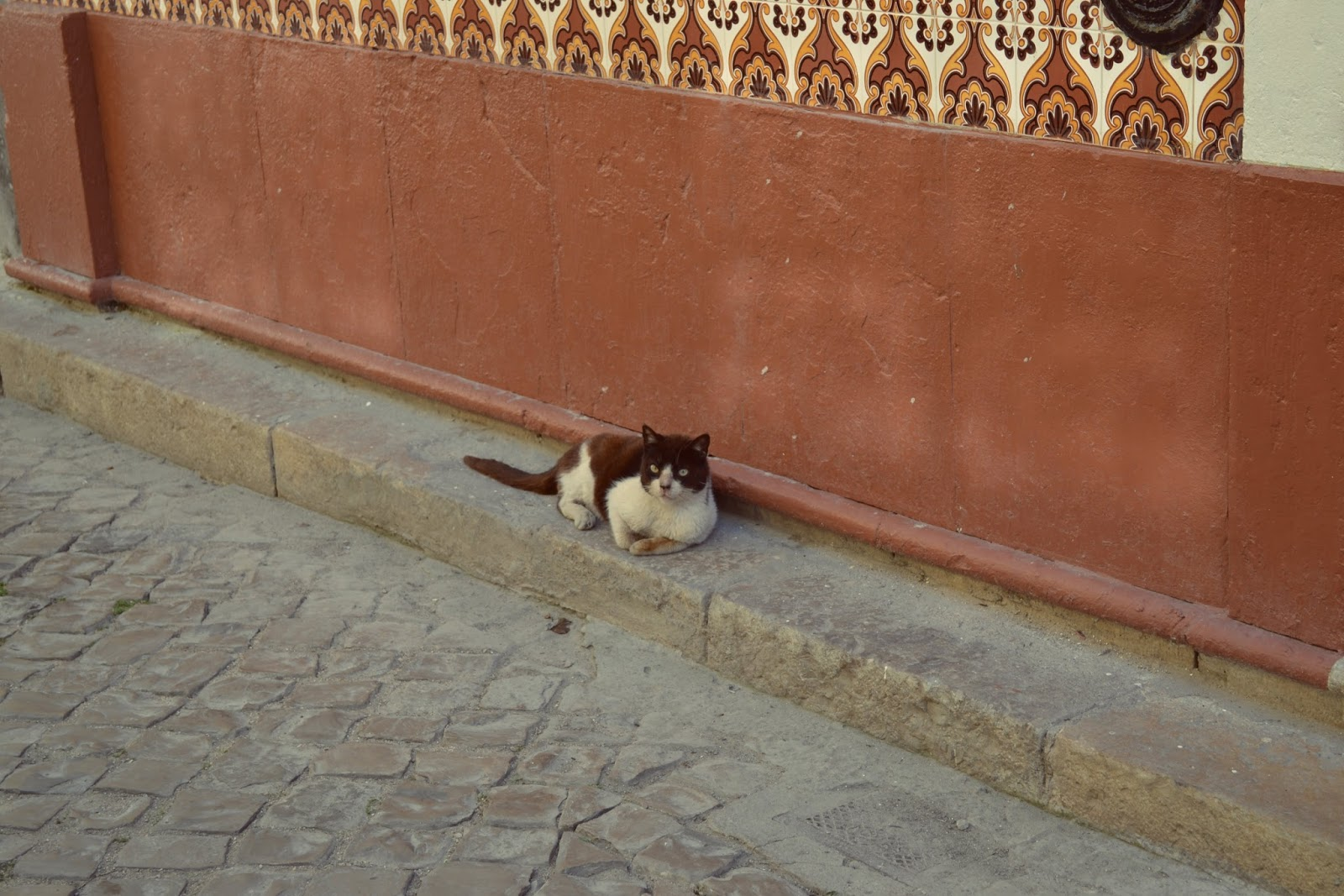 grubby cat in olhao portuagl
