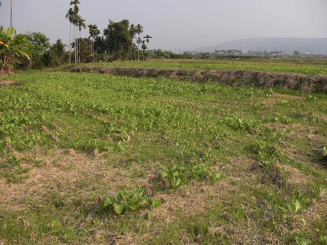 出售農地土地|位於南投草屯,靠近東草屯交流道