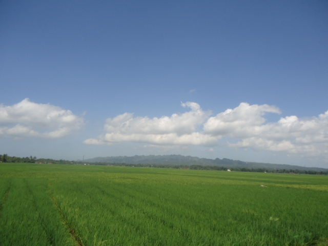 Foto Pemandangan Alam
