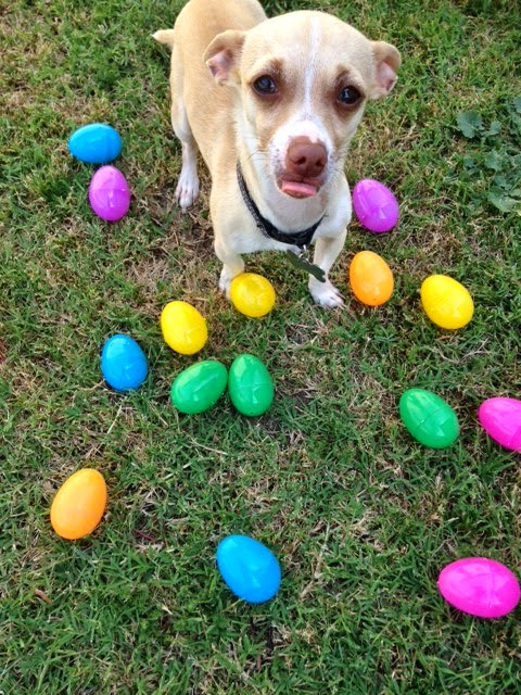 easter dog photo