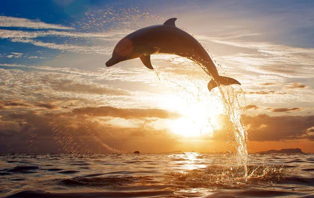 Dolphin escapes captivity, reunites with its pod in the open ocean