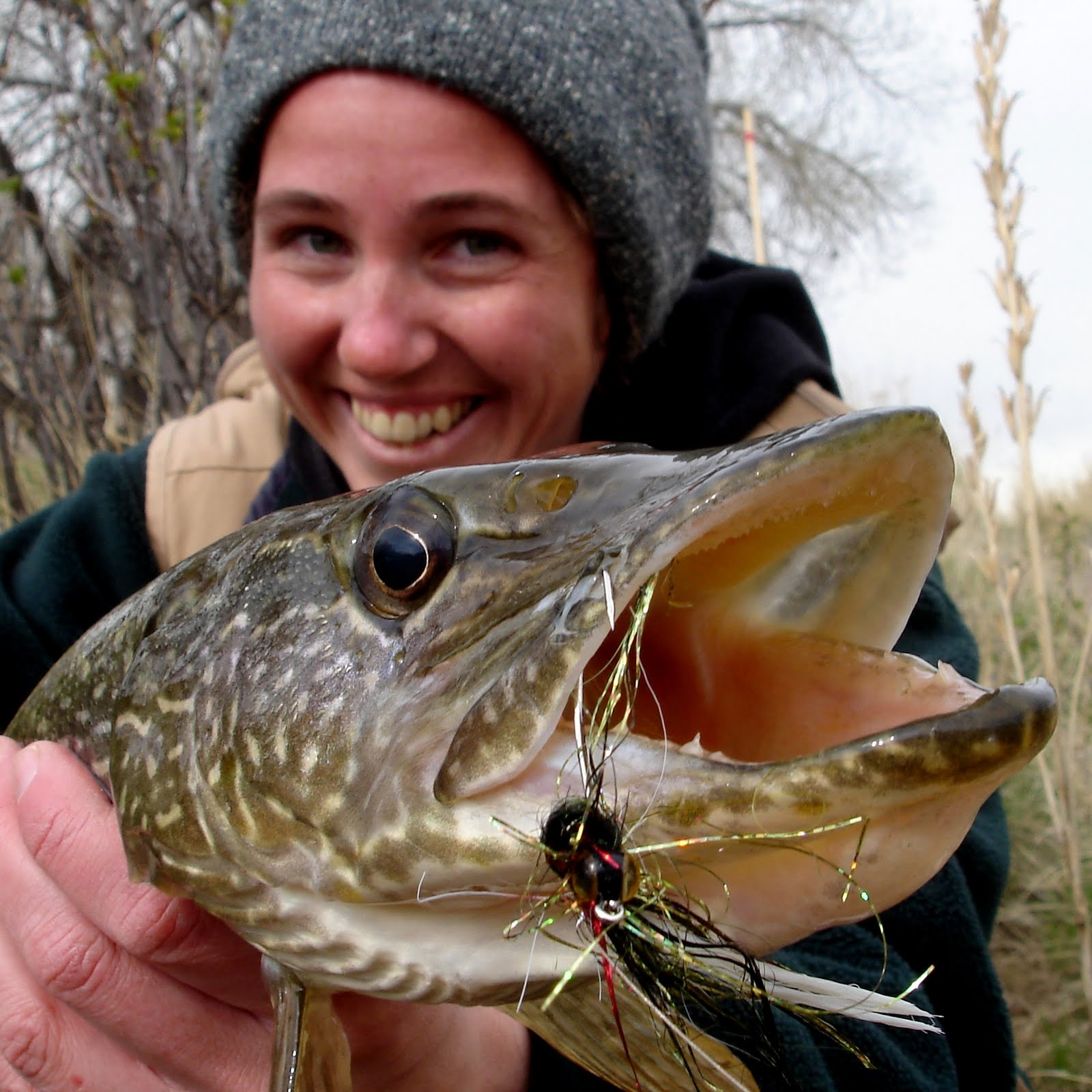 Colorado fly fishing reports northern pike directory for Pike fishing colorado