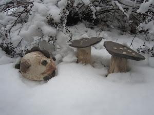 Poule et champignons !
