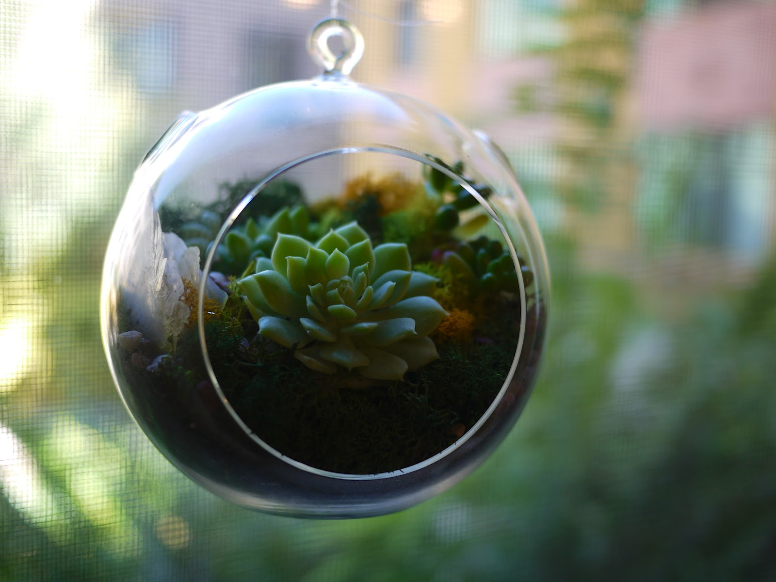 Little Hiccups Hanging Succulent Terrarium Workshop