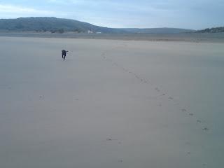 Cornish Beach, Dog Running Free, Dog Ban Lifts