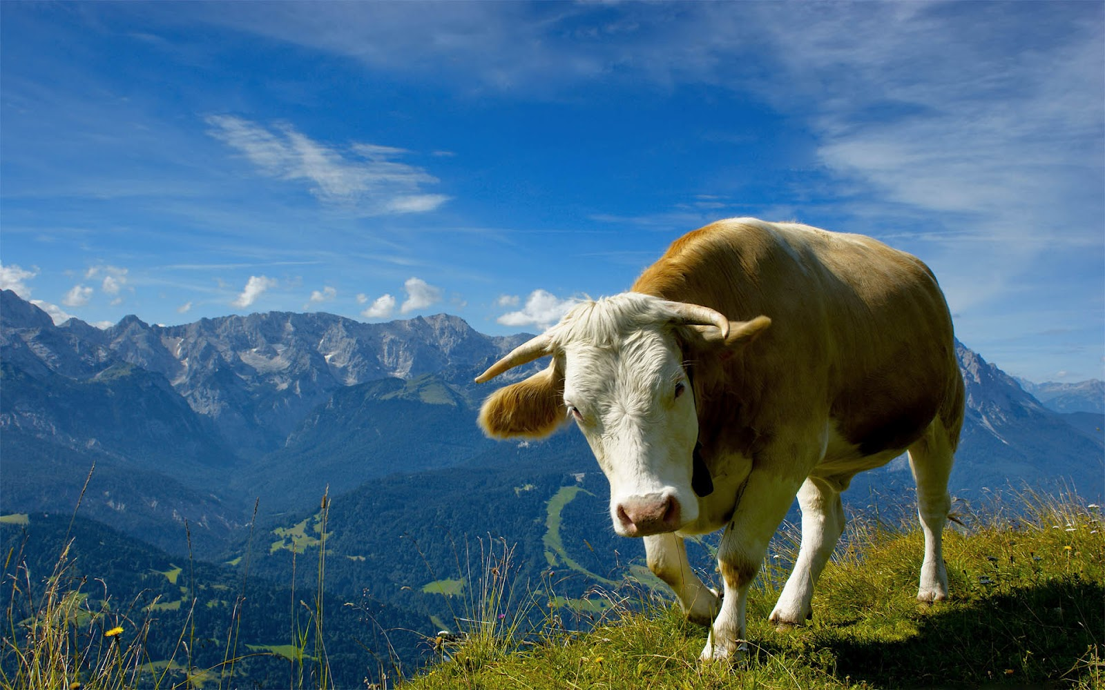 top new wallpapers  Wallpaper Cow