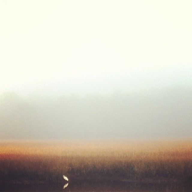 Fog over marsh, bird