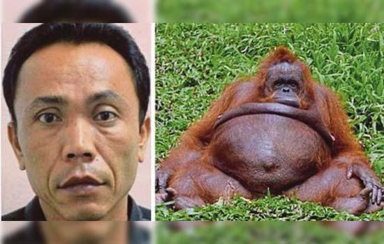 Pekerja zoo kantoi rogol orang utan