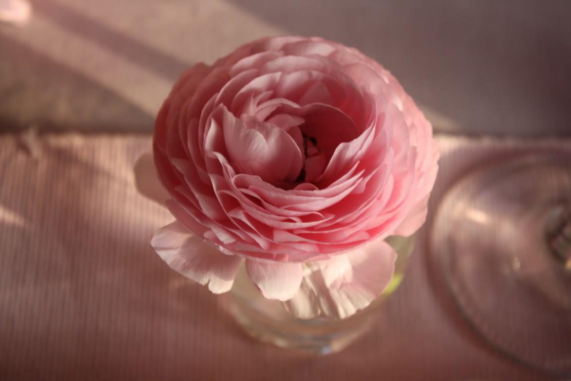thème anniversaire rose