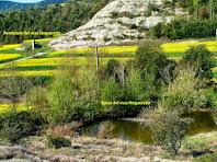 La bassa del mas La Noguereda i, al seu darrere, la xemeneia d'una possible teuleria