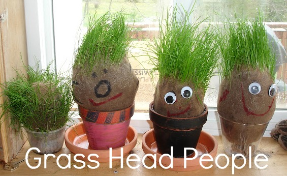 DSC05938 - Growing GRASS HEAD Ornamental Plant Seeds - Free Advertisement