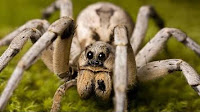 Spiders HD 22