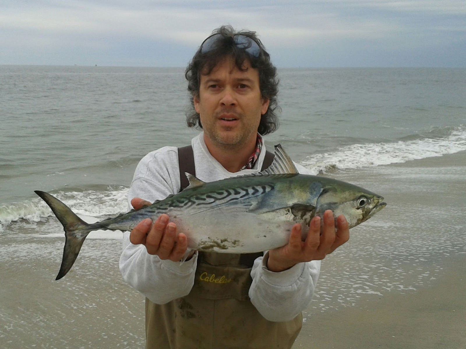 Fins and folly sandy hook nj false albacore fun for Nj surf fishing reports