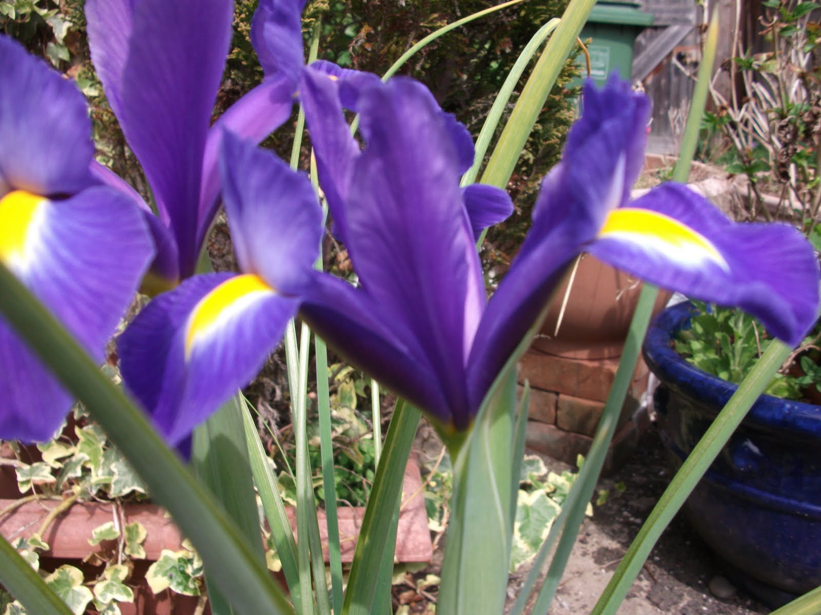 Clan of the entangled thicket 1734 iris my visit to the parthenon gallery in the british museum encouraged me to explore iris and as the flower that is her namesake has just burst into flower izmirmasajfo
