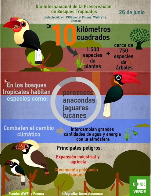 http://www.efeverde.com/noticias/los-cientificos-explican-la-mayor-diversidad-de-los-bosques-tropicales/
