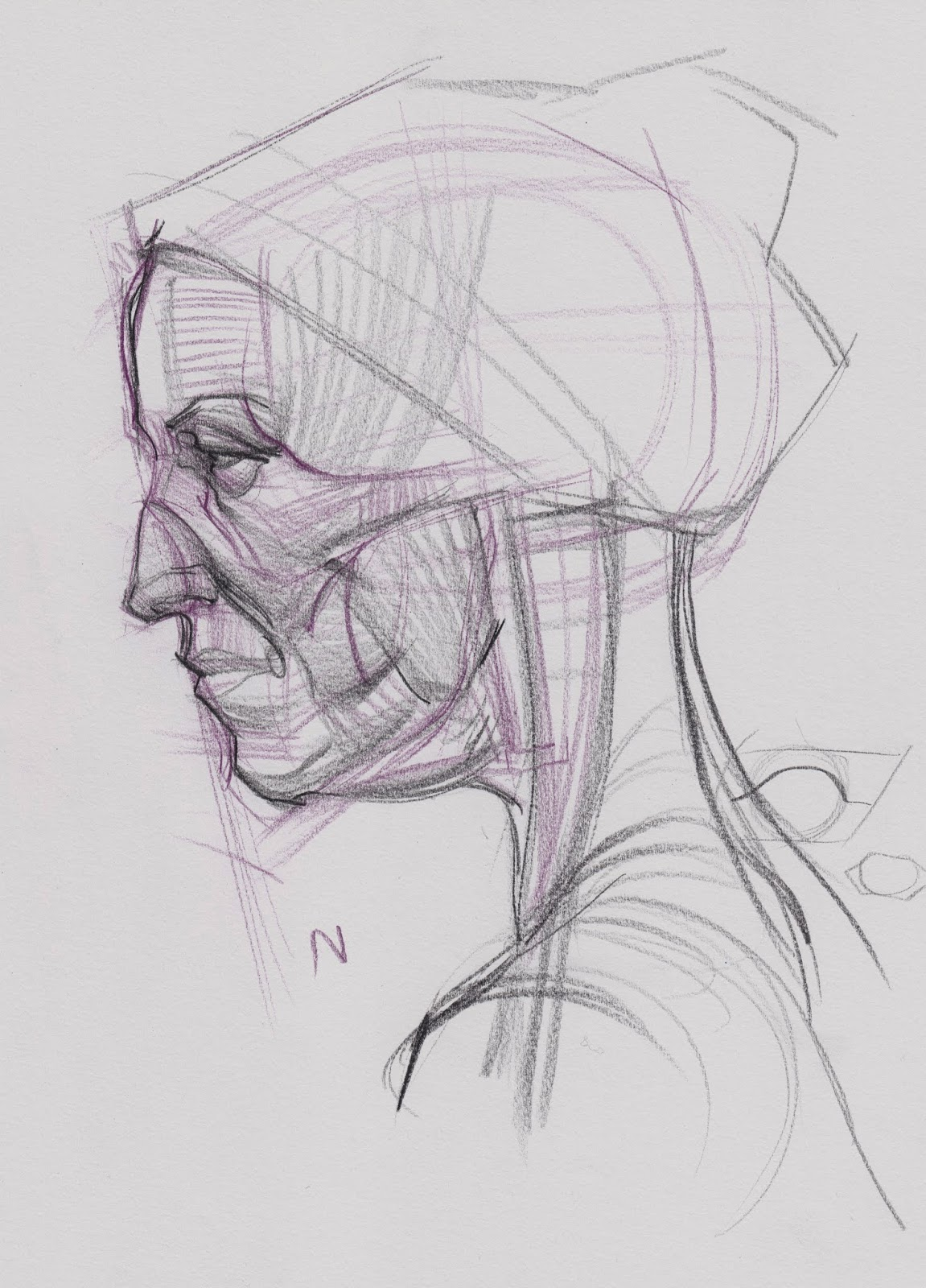Face Anatomy Drawing Gallery - human body anatomy