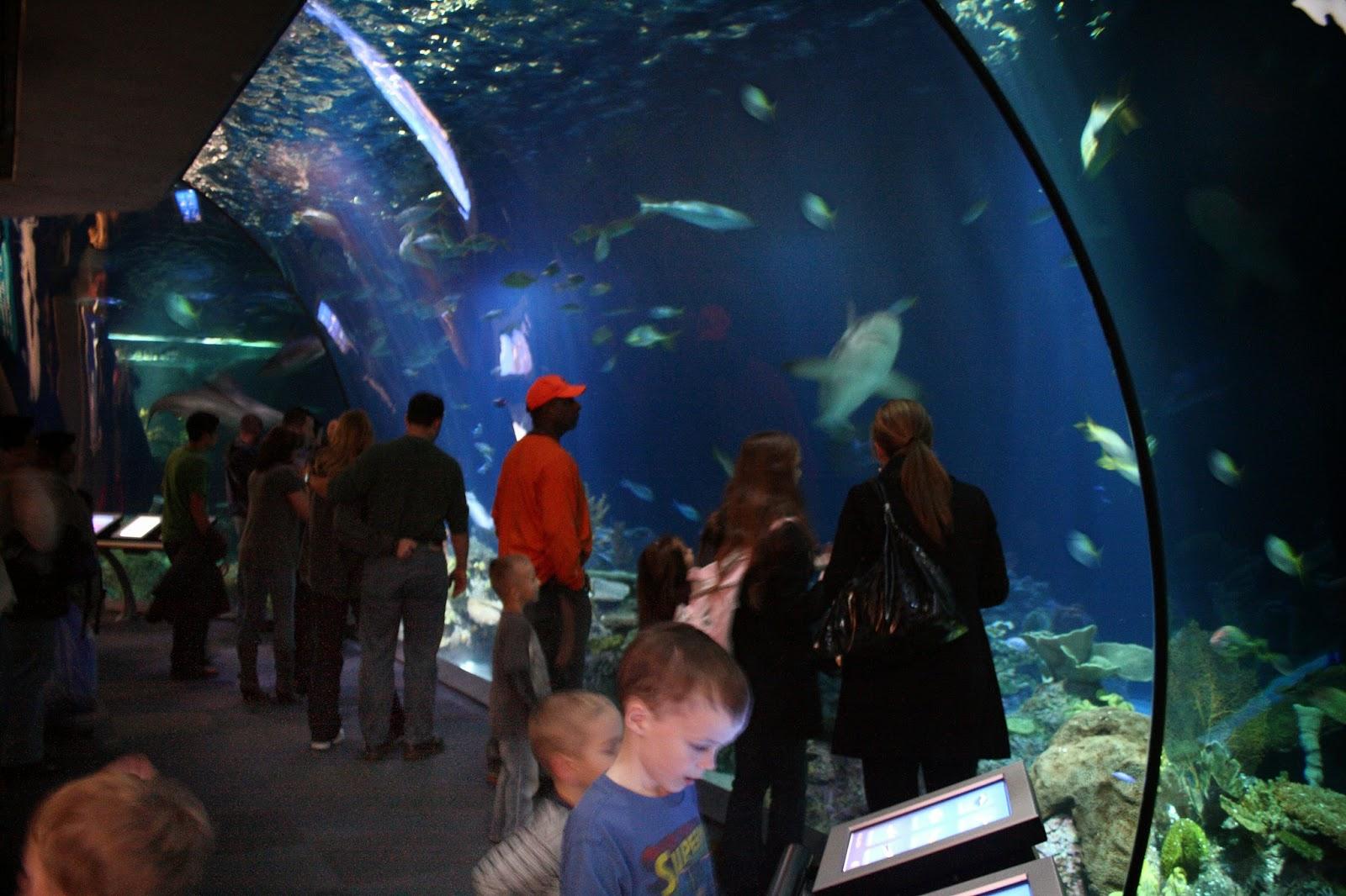 Shedd Aquarium The Most Largest Aquarium In Chicago