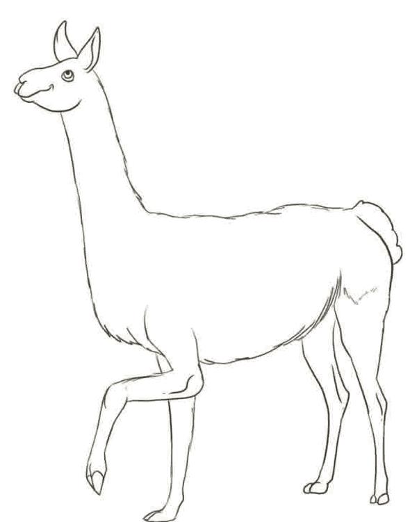 baby llama coloring pages - photo#16