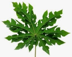 Ramuan Herbal untuk Penyakit Malaria