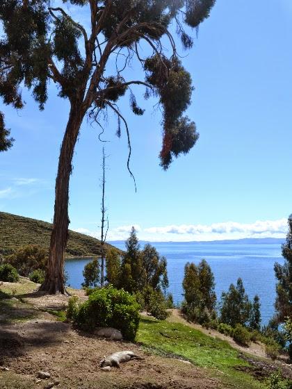isla del sol lake titicaca copacabana bolivia