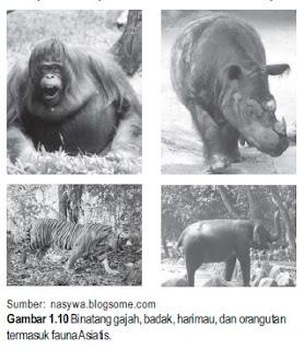 JENIS PERSEBARAN FAUNA DI INDONESIA