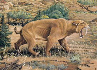 Saber-Tooth-Cat -اكبر موسوعة للحيوانات المنقرضة على الانترنت (بالصور)