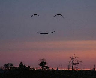 Hidden Smile and Bird Illusion